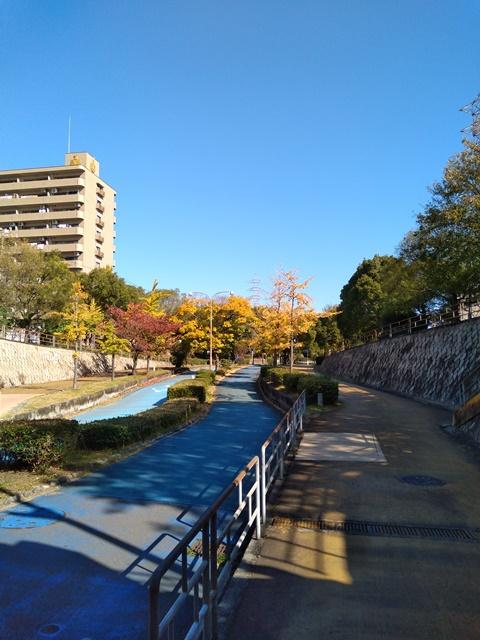秋の緑陰道路